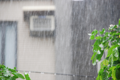 Taiwan Journal: Typhoon Day